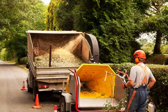 collect wood chips from tree chipping