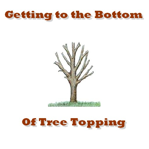 getting to the bottom of tree topping