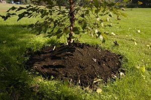 mulch mound