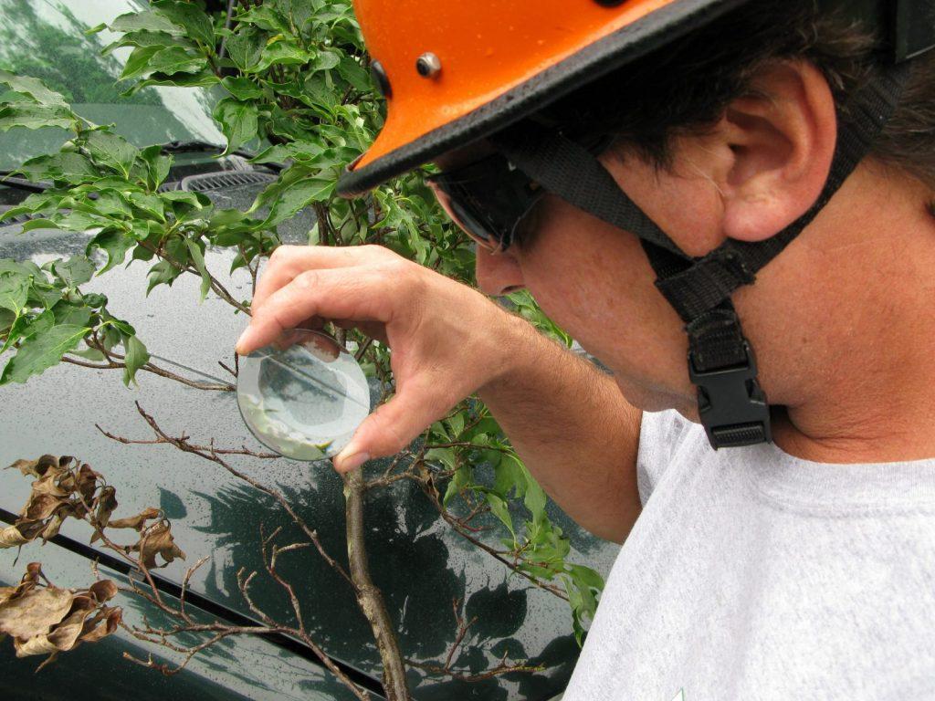 certified tree expert