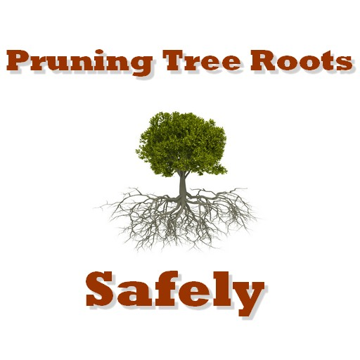 pruning tree roots safely