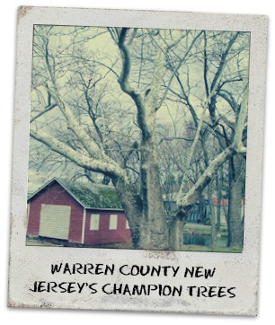 warren county champion trees