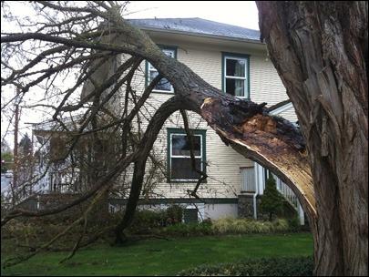 hazardous tree nj