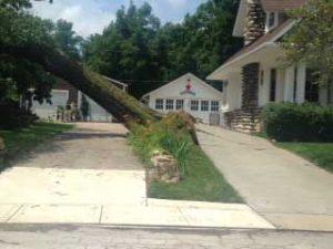 neighbors tree threat