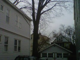tall tree over house
