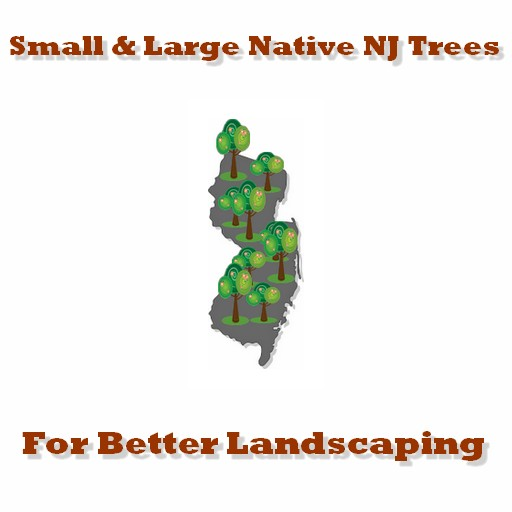 native NJ Trees