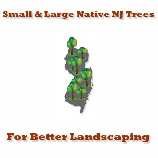 native NJ Trees
