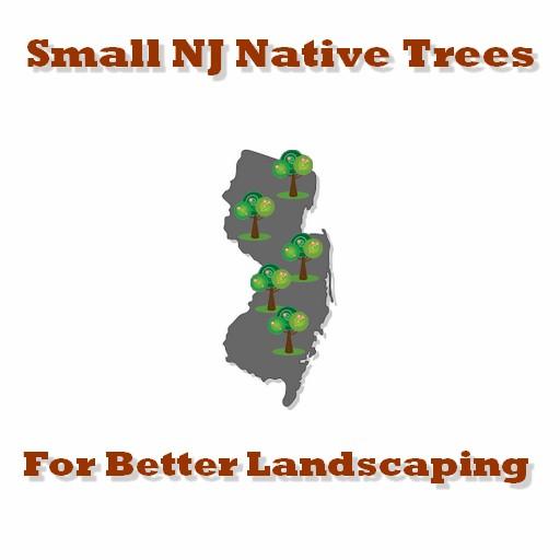 NJ Trees