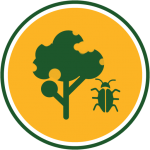 Tree insect and disease