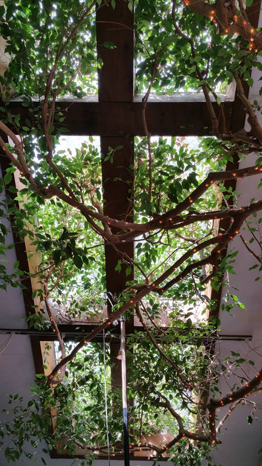 Indoor landscaping - precision tree and landscape nj2
