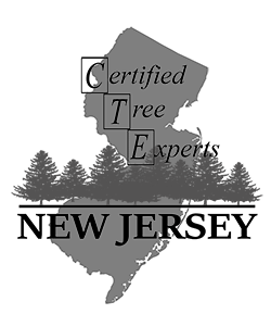 NJ Certified Tree Experts
