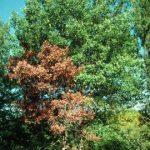 dead tree branches