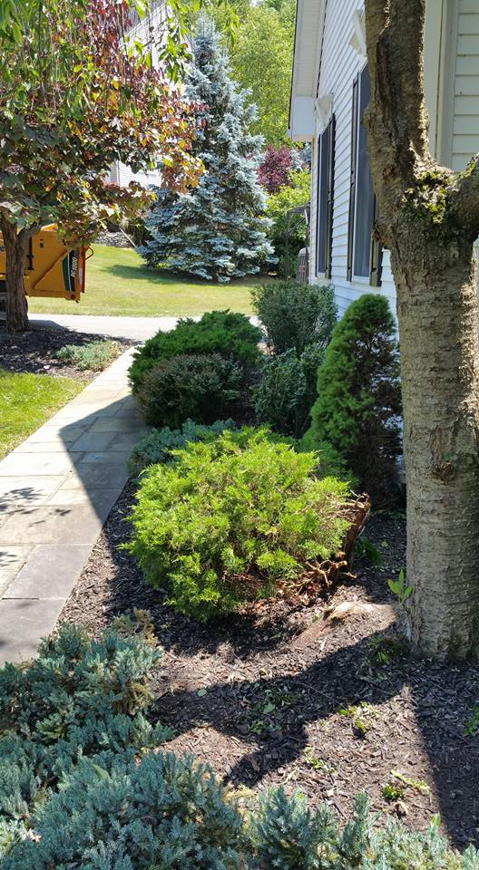 precision tree and landscape - landscape design nj4