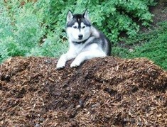 Pet friendly Mulch