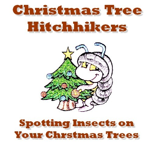 Christmas tree hitchhikers