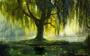 willow tree magic