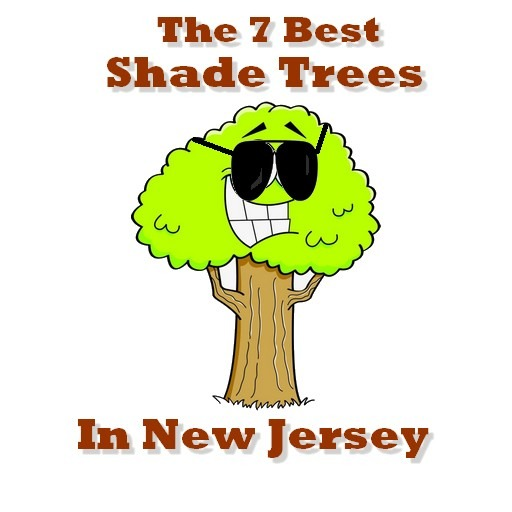 best shade trees in nj