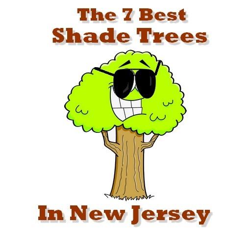 best shade trees in nj