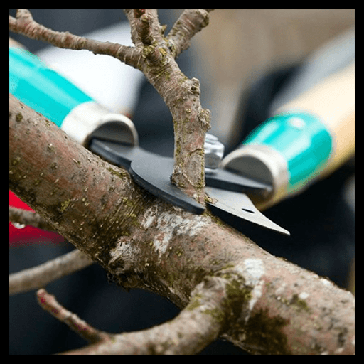 best practices for tree pruning