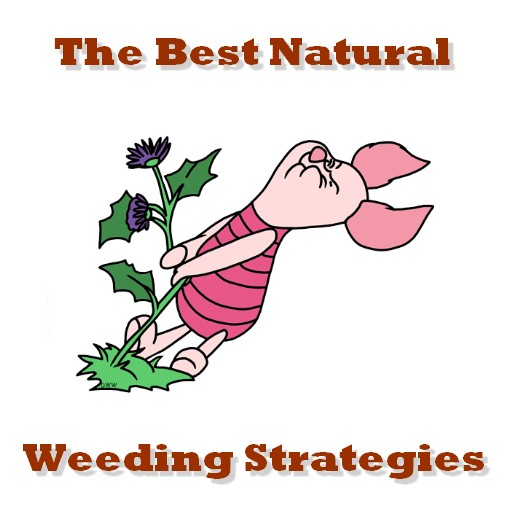 best weeding methods