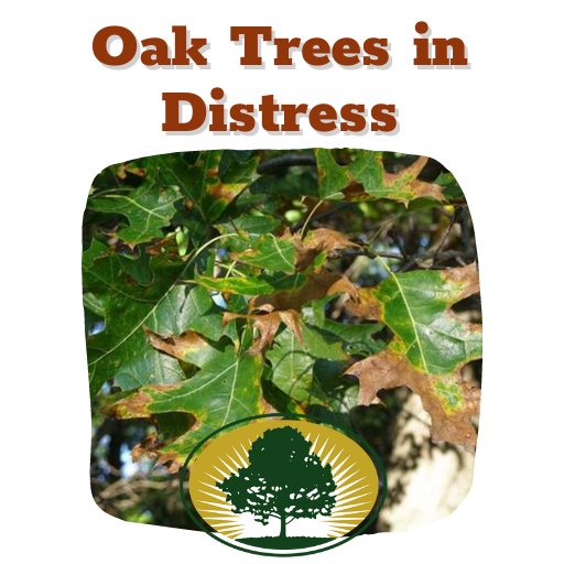 oak tree diseases